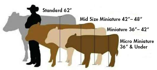 cattle-height